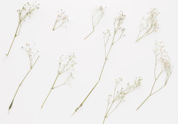 Composición de ramitas de plantas con flores pequeñas.