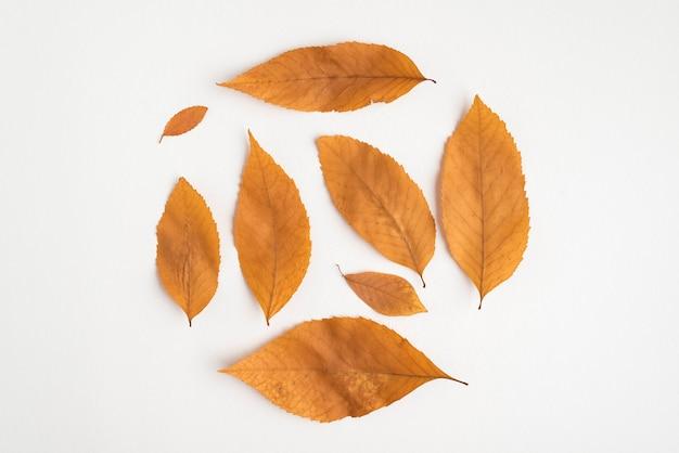 Composición redonda de hojas amarillas secas