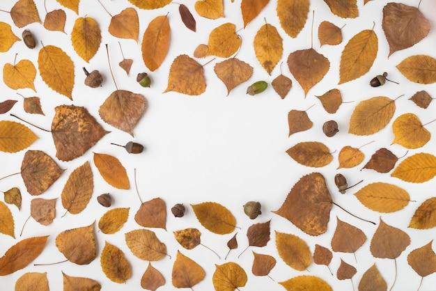 Composición redonda con hojas marchitas y bellotas