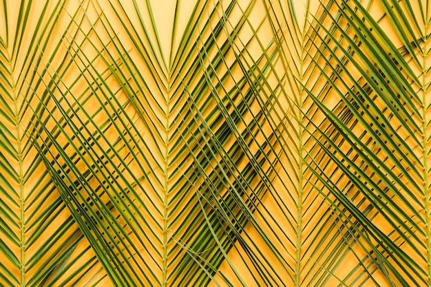 Composición simétrica flat lay de hojas