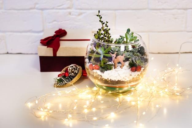 Composición de suculentas con regalo de navidad