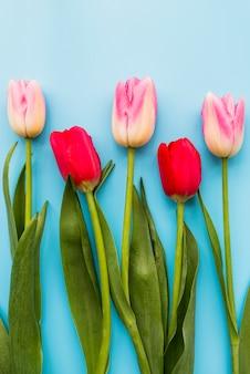 Composición de tulipanes frescos rojos y rosas