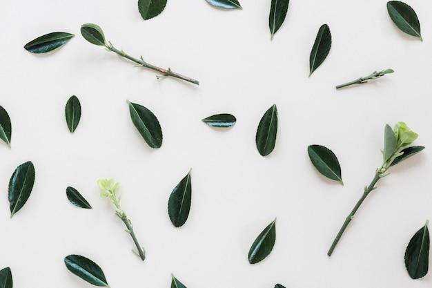 Composición de vista superior de hojas