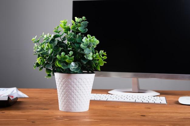 Computadora y planta en el escritorio.