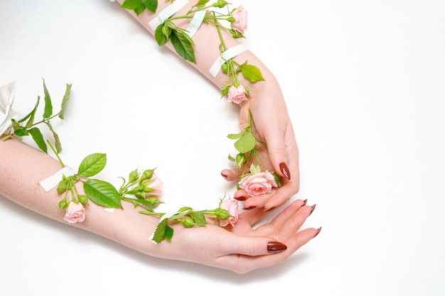 De común acuerdo los capullos de rosa rosados en las manos, en el fondo blanco, aislante, concepto de cuidado de piel de la mano.