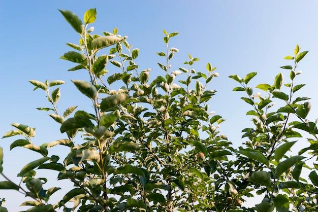 Concepto de agricultura con ángulo bajo de plantas