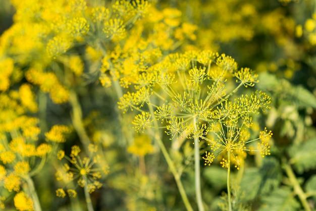 Concepto de agricultura saludable campo de plantas