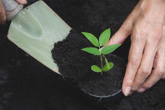 Concepto del almácigo por la mano humana con el árbol joven en fondo de la naturaleza.