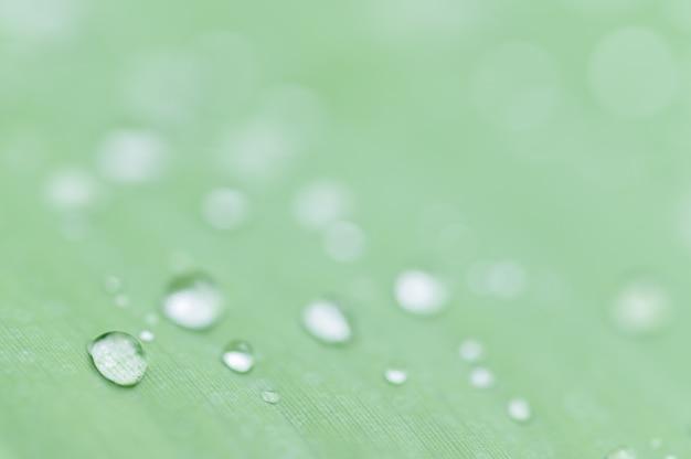 El concepto de amar el medio ambiente verde del mundo