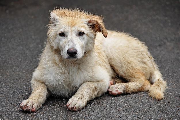 El concepto de animales sin hogar.
