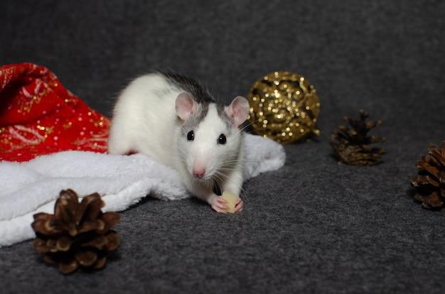 Concepto de año nuevo linda rata doméstica en una decoración de año nuevo. símbolo del año