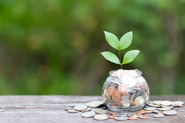 El concepto de árbol y monedas ahorra dinero