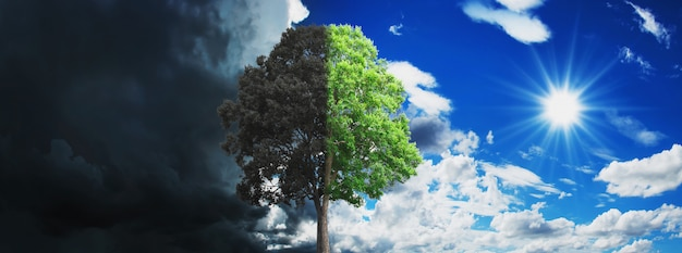 Concepto de árbol que crece y seca con cielo y sol.