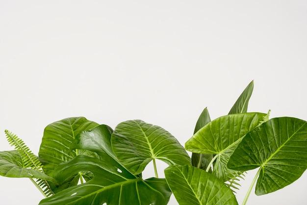 Concepto de botánica de primer plano con espacio de copia