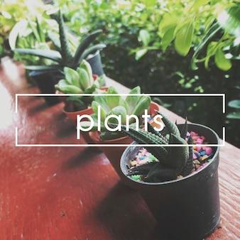 Concepto botánico de ecología vegetal de verano