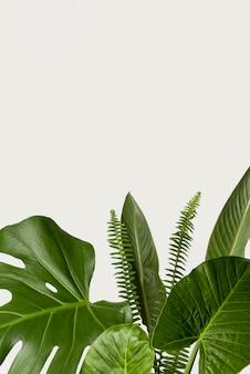 Concepto botánico de primer plano con espacio de copia