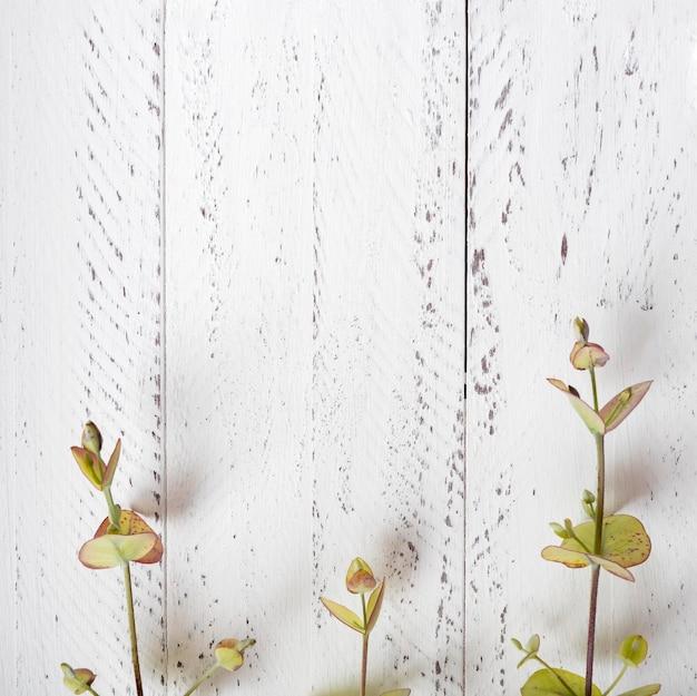 Concepto botánico de vista superior con espacio de copia