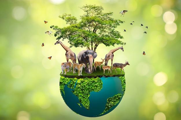 Concepto conservar reserva natural reserva de vida silvestre tigre ciervo calentamiento global pan de alimentos ecología manos humanas protegiendo a los animales salvajes y salvajes tigres ciervos, árboles en las manos fondo verde luz del sol