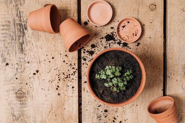 Concepto creativo flat lay de jardinería