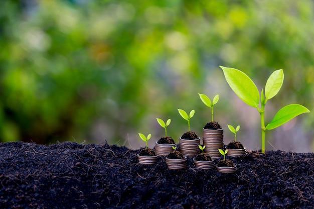 Concepto de crecimiento del ahorro, planta que brota del suelo