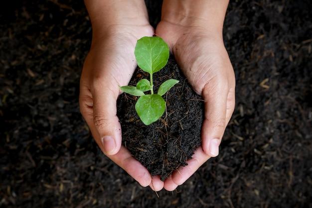 Concepto de crecimiento, las manos están plantando las plántulas en el suelo.