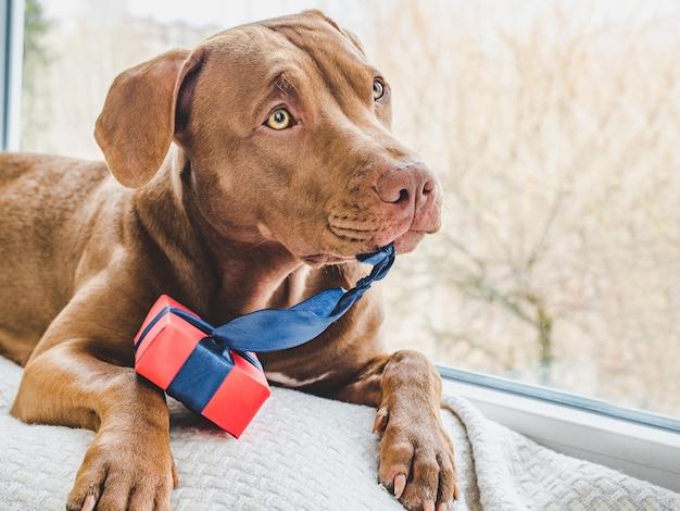 Concepto de cuidado, educación, entrenamiento de obediencia, crianza de mascotas.