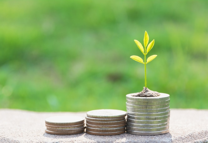 Concepto de árbol de dinero que crece de dinero. concepto financiero, contable y de ahorro.