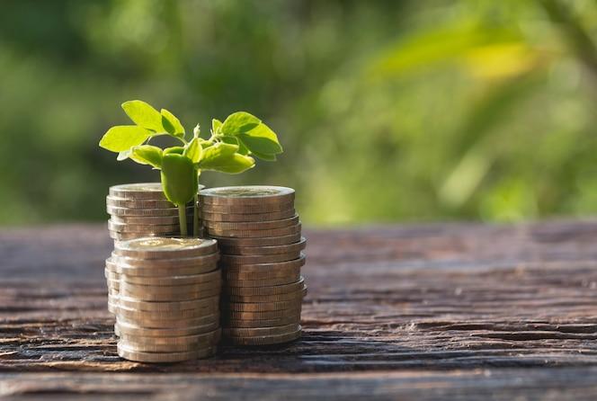 Concepto de árbol de dinero que crece de dinero. concepto financiero y de ahorro.