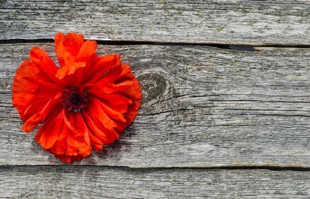 Concepto de día de fiesta nacional estadounidense. espacio de madera con flor de amapola roja. espacio conmemorativo de flores de amapola