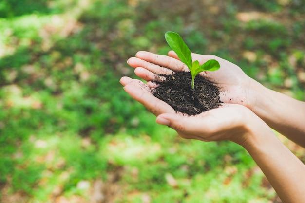 Concepto del día mundial del medio ambiente. mano que sostiene la planta.