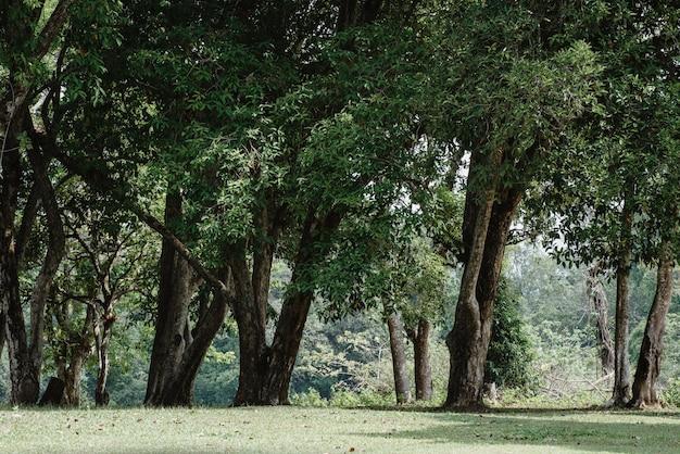Concepto del día de la tierra con bosque tropical, escena natural con dosel de árboles en la naturaleza