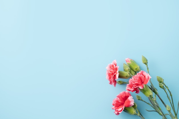 Concepto de diseño de regalo de felicitación navideña del día de la madre con ramo de clavel en la superficie de la mesa azul brillante