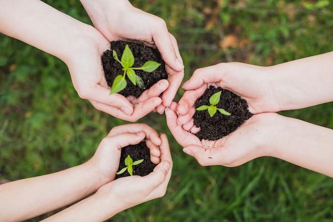 Concepto eco con manos sujetando pequeñas plantas