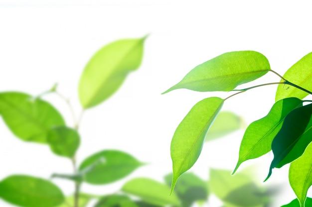 Concepto ecológico, luz solar brillante a través de hojas verdes