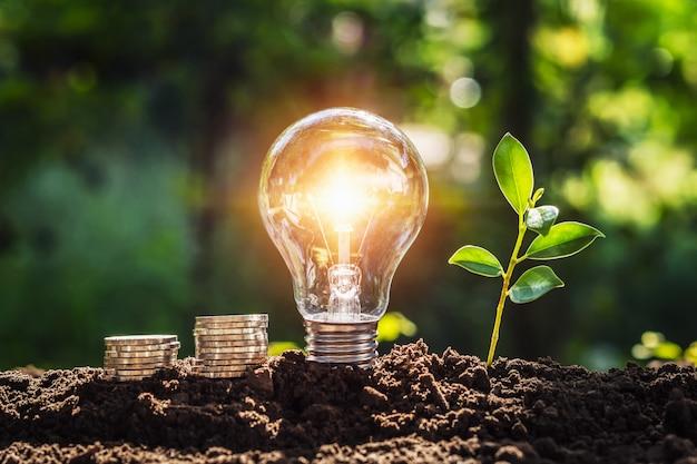 Concepto de energía. eco power. bombilla con dinero y plantas jóvenes en el suelo