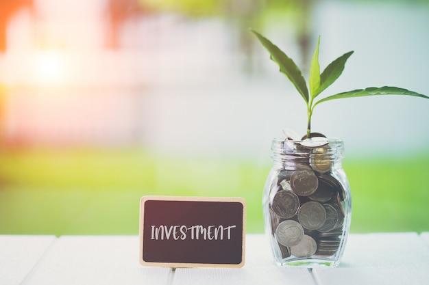 Concepto financiero de ahorro e inversión de dinero. planta que crece en monedas de ahorro