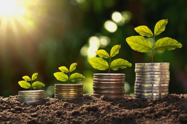 Concepto de finanzas y contabilidad en crecimiento. planta joven en monedas con salida del sol