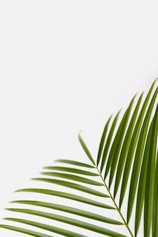 Concepto de hoja de follaje verde de primer plano