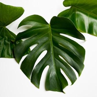 Concepto de hojas verdes naturales de primer plano