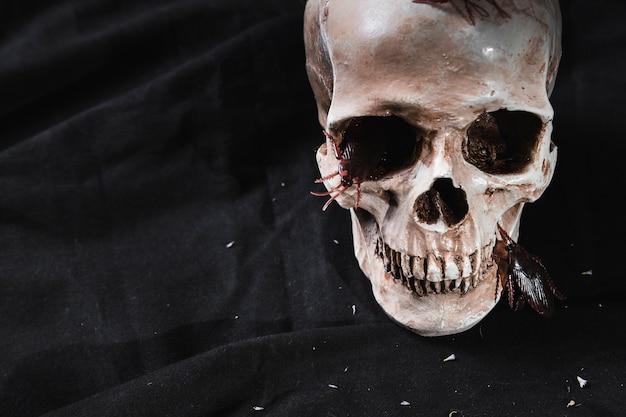 Concepto de horror con cráneo y cucarachas