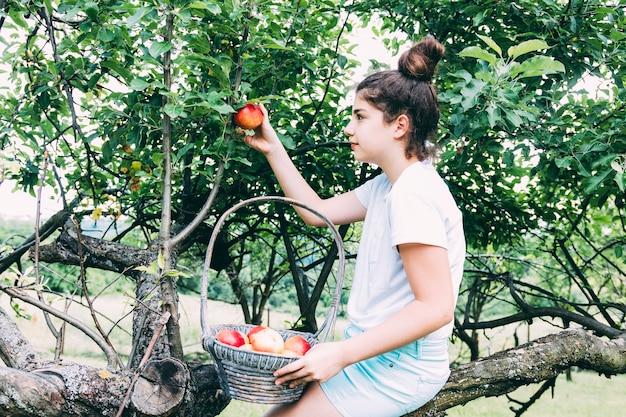 Concepto de huerta con mujer cogiendo manzanas
