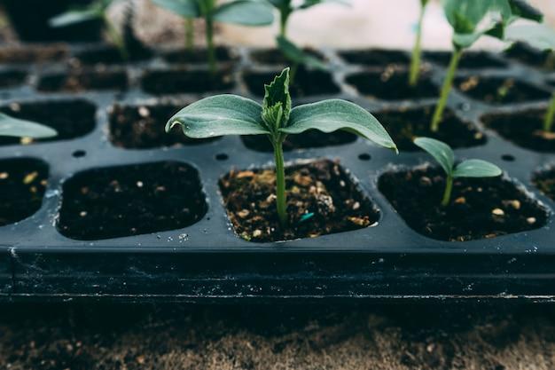 Concepto de huerta con plantas pequeñas