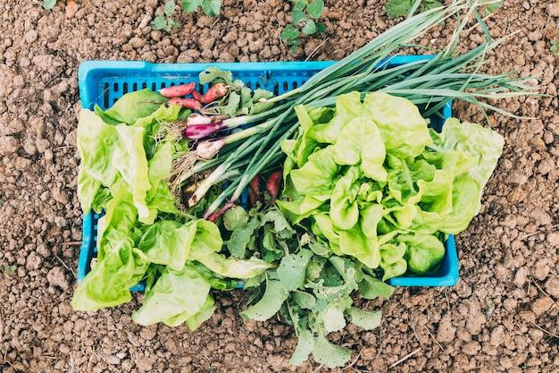 Concepto de huerto y granja con ensalada