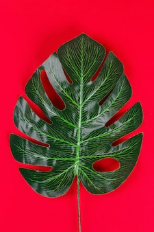 Concepto de ideas de verano borde de marco negro blanco de hoja tropical sobre fondo rojo.