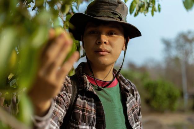 Concepto de jardinería un jardinero masculino mirando una fruta comprobando el tamaño, el color y la calidad antes de la temporada de cosecha.