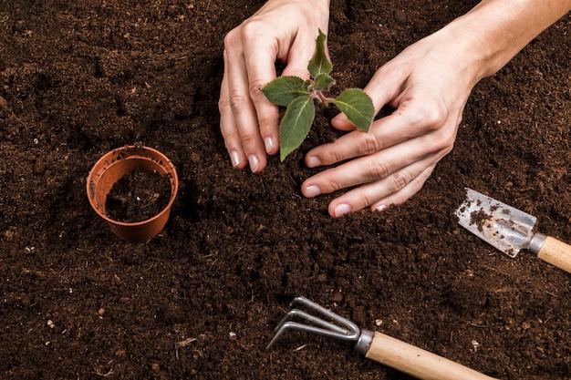 Concepto de jardinería con manos femeninas