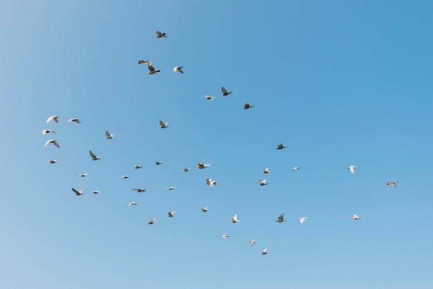 Concepto de libertad con pájaros volando