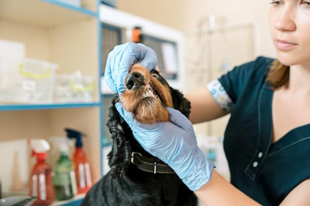 El concepto de medicina, cuidado de mascotas y personas - médico veterinario y de perros en la clínica veterinaria