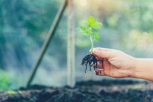 Concepto de medio ambiente ecológico tierra verde. de la mano con el crecimiento del árbol en el día de la tierra en la mañana