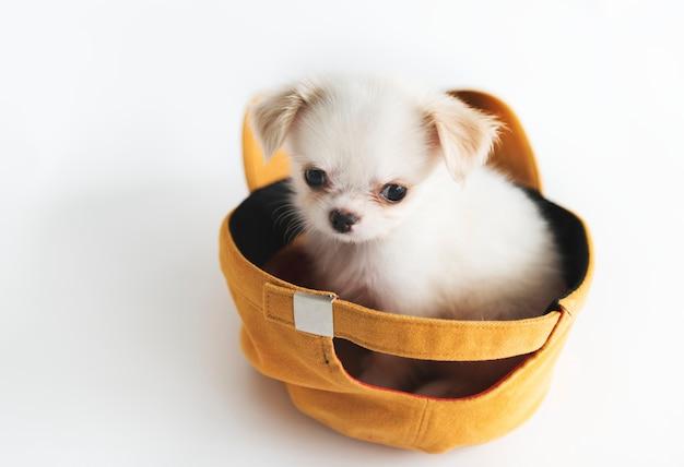 Concepto miniatura del perro de chihuahua